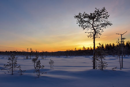Winter landscape at laplandhusky in Swedish Lapland