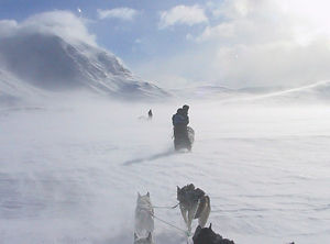 Sleddog adventure self drive husky tour in Swedish mountain at Laplandhusky in Swedish Lapland