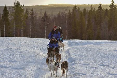 Self drive sleddog safari at Laplandhusky in Swedish Lapland