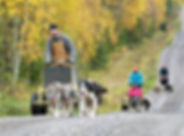 Husky self drive cart tour at Laplandhusky in Swedish Lapland