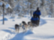 Self drive husky tour at Laplandhusky in Swedish Lapland