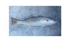 pescada branca.png