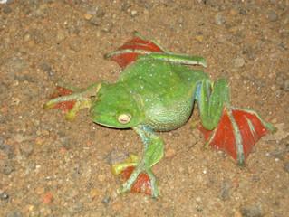 Bio-Inspiration [Flying Frog]
