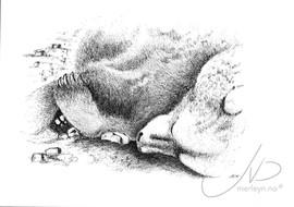 Sovende bjørn