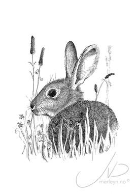 Jasi / Hare