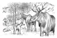 Familien Elg