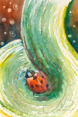 M.W32 : Lady bug