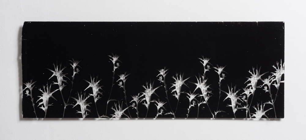 Thorns - 2015 - etching on perspex - 65X24cm