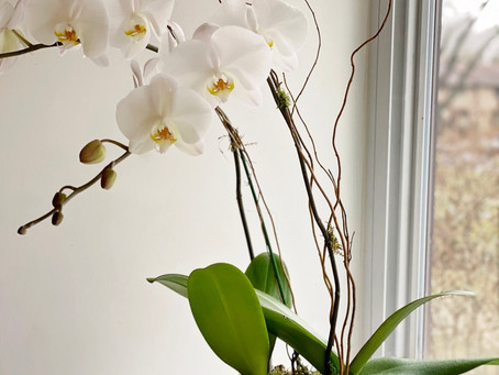 Caring For Your Orchid Plant