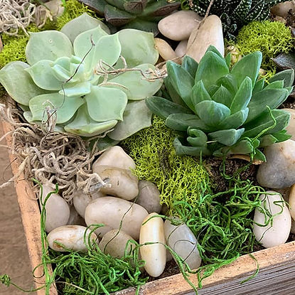 succulent plants with rocks
