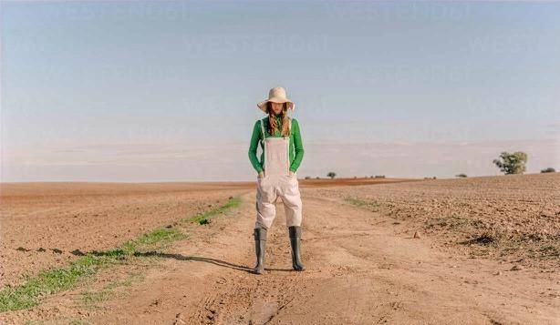 Szudánifű vetés, szudánifű vetőmag