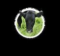 greening feed.png