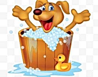 Bark bath self serve dog wash grooming best grooming prices in oc solutioingenieria Gallery
