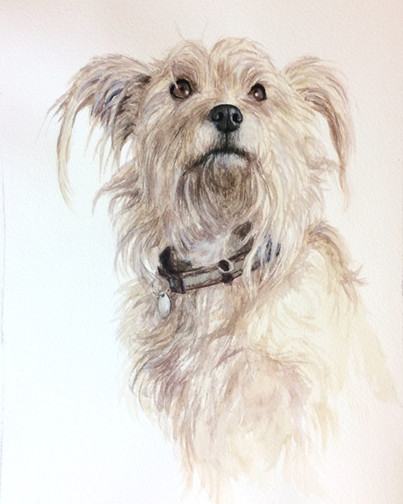 Commissioned Portrait of Dog