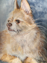 Commissioned Portrait of long haired Chihuahua