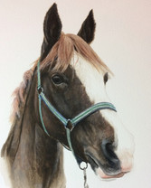 Commissioned Portrait of Horse