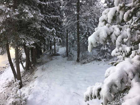 River Trail in Winter
