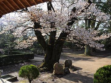 四季の風景(春).JPG