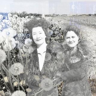 dandelion field.png