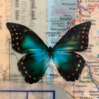 encaustic wings.jpge