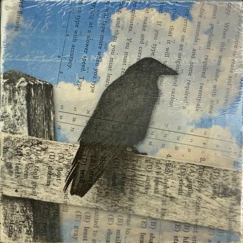 misfit crow