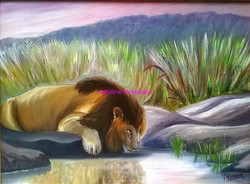 Lion au point d'eau
