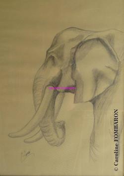 Profil d'éléphant crayon sur papier