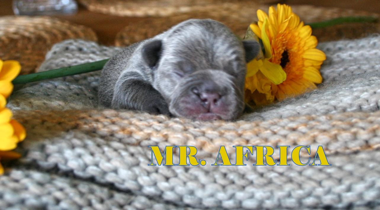 mr. africa