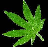png-transparent-a-piece-of-marijuana-lea