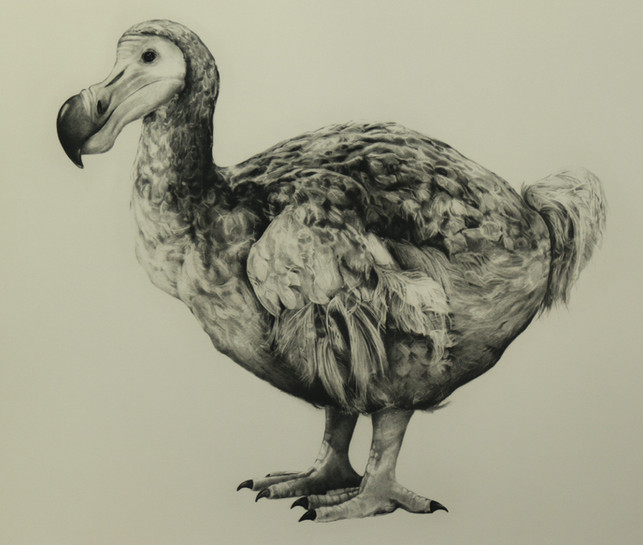 Rowland's Dodo Version 1