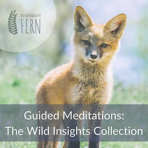Guided Meditations: The Wild Insights Collection