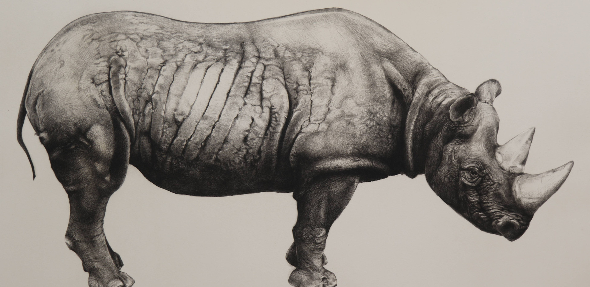 Rhinoceros (state III)