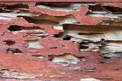 Termite Repair Builder - CRC