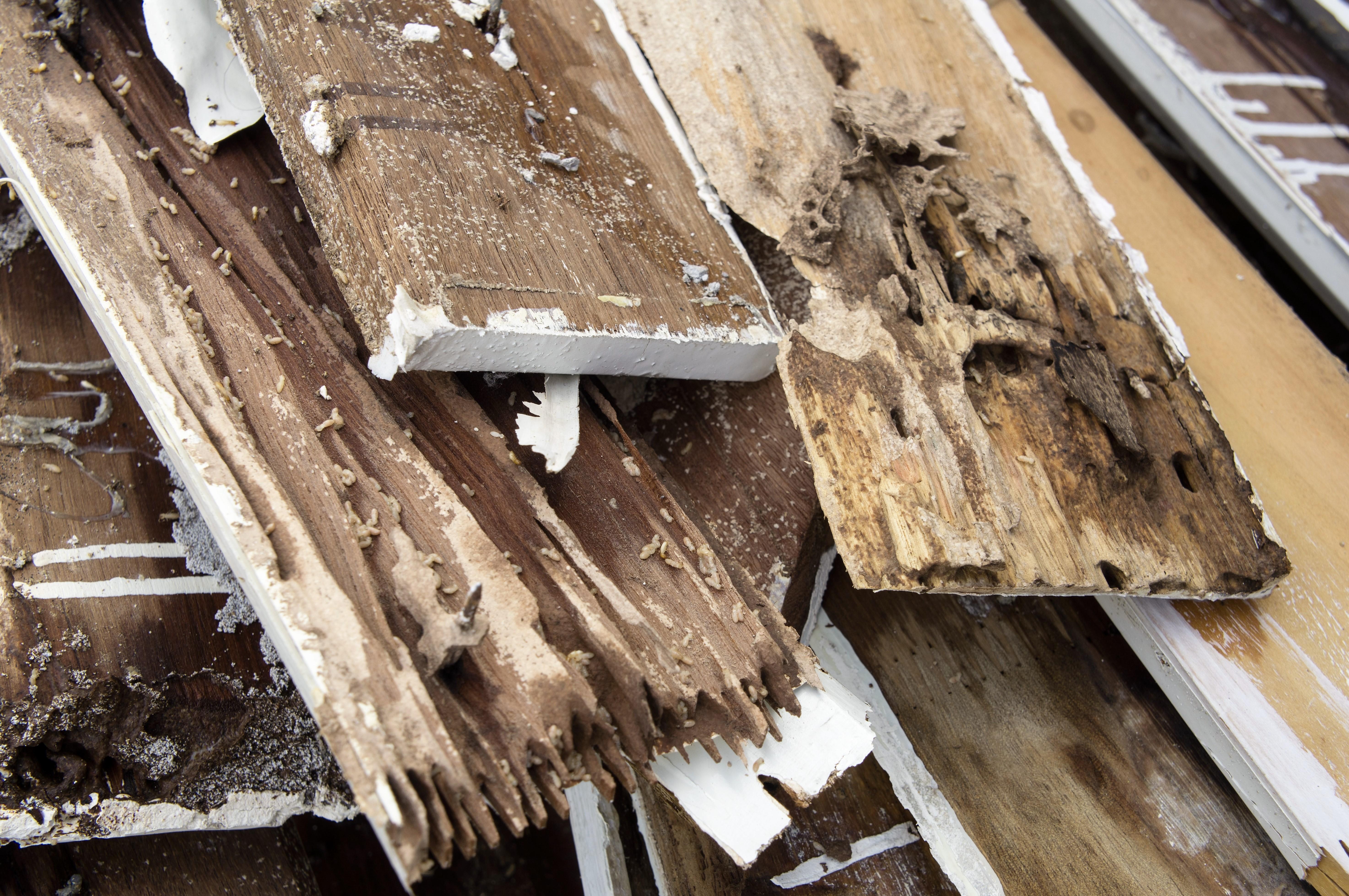 Termite Repaires Bayside - CRC