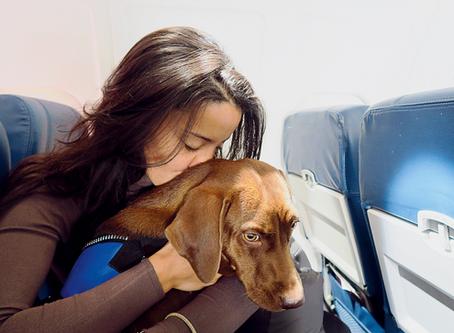 Como viajar de avião com seu melhor amigo de estimação!