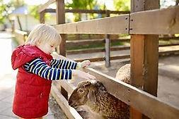 mouton enfant.jfif