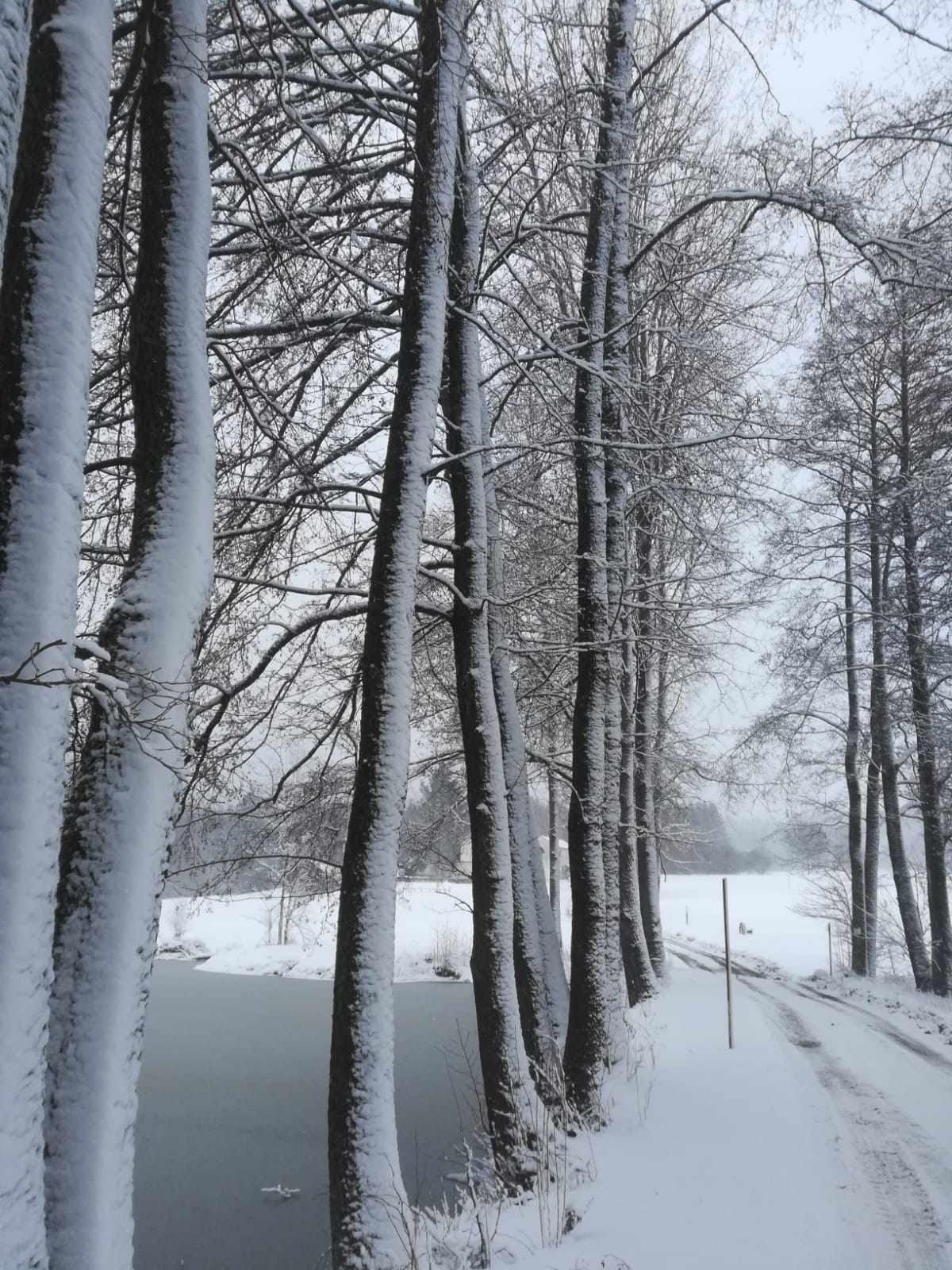 Winter_Bäume_mystisch.jpg