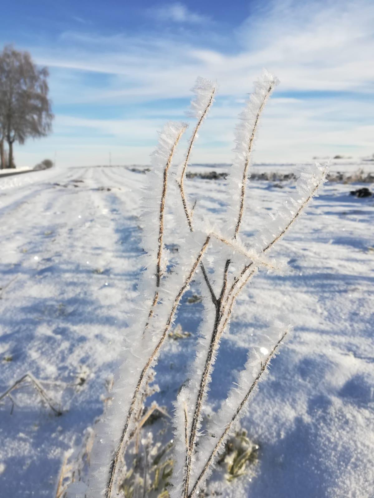 Icy sonnig 2.jpg