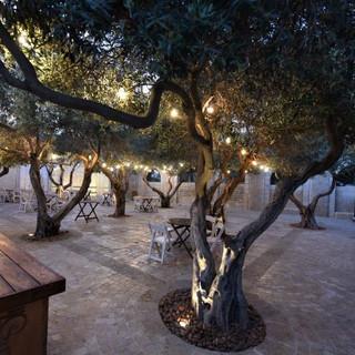 מתחם קיר התורמים. עצי זית עתיקים ומרשימים, מוארים בגופי תאורה שקועי רצפה, וכן בגרלנדה תלויה, היוצרת אווירה חגיגית ומרשימה