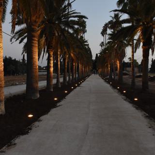 שדרת הדקלים המיתולוגית של מקוה ישראל. כל עץ קיבל גוף תאורה משלו, והשדרה הארוכה מקבלת את האימפקט הראוי לה