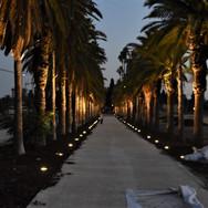 Palm Avenue | Mikve Israel