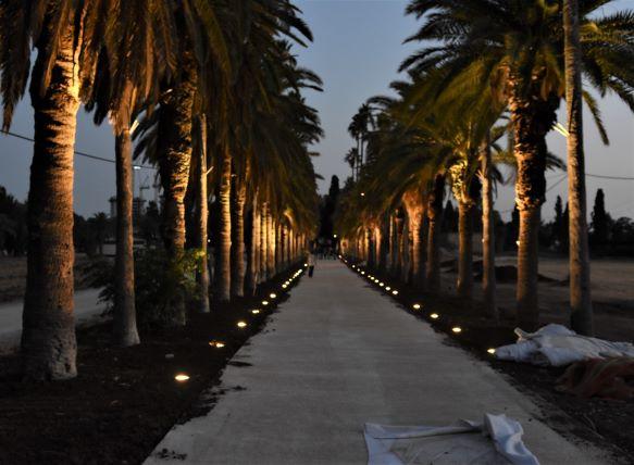 שדרת הדקלים הארוכה בכניסה לבית הספר מקוה ישראל. פנסים במדרך לכל אורכו