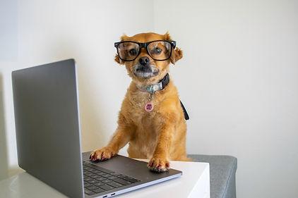 cute-dog-wearing-glasses-working-on-comp
