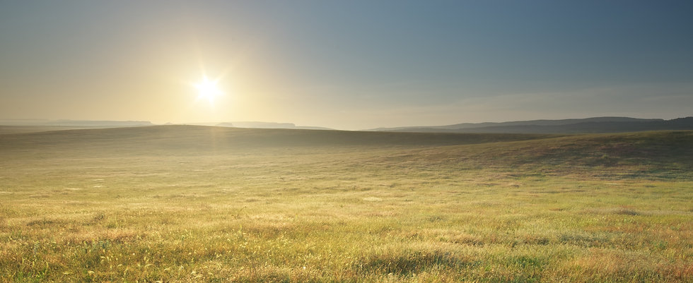 morning-nature-meadow-landscape-YNCDZTS.