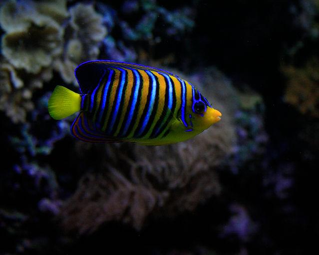 Tropical fish a.jpg