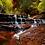 cascade, Zion national park