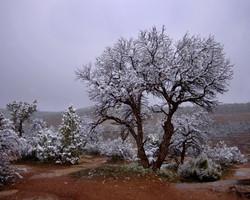 Colorado National Monument Snow