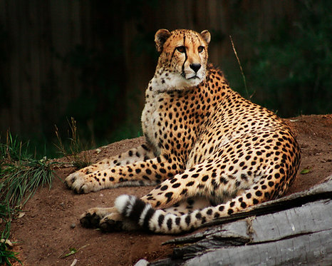 Wildlife from Zoos