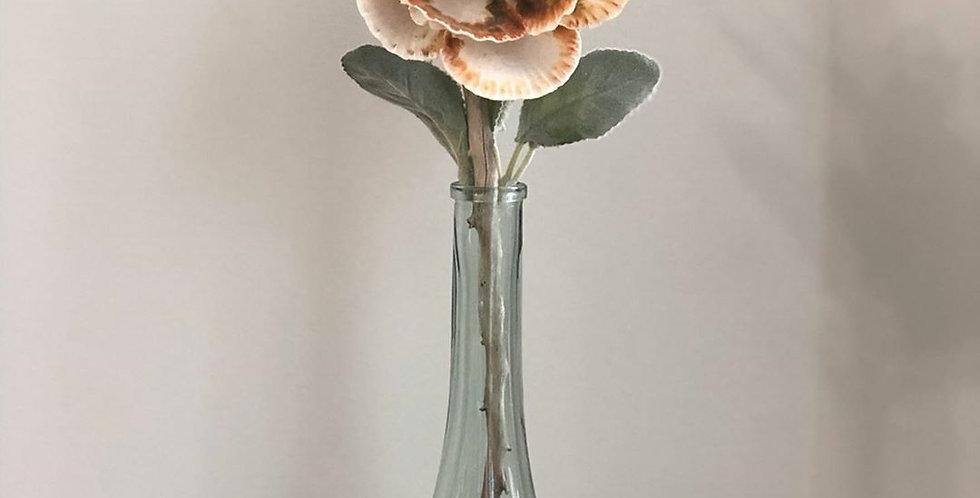 Seashell Flower in vase