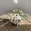 Thumbnail: ZenFlower Terrarium - Inner Peace